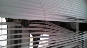 Ralphie walking on the window
