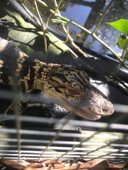 danigator2